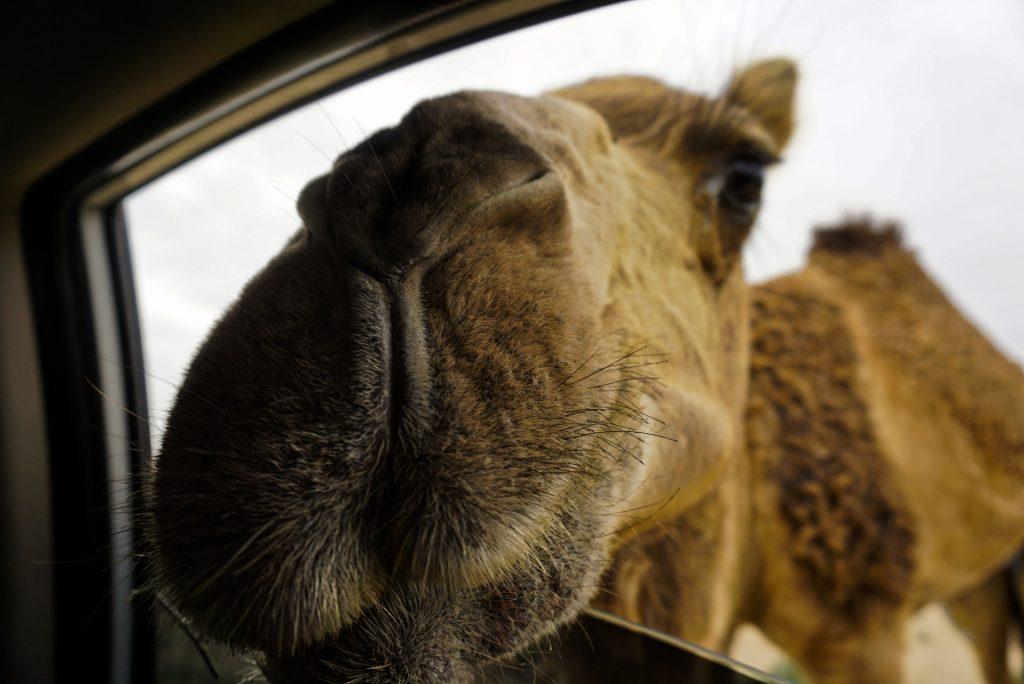 A new friend, Qeshm, Iran