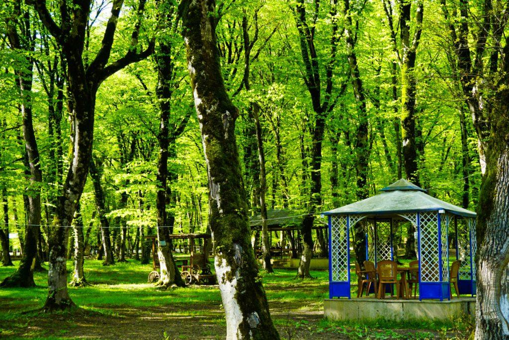 Tea in the forest, Ismailli, Azerbaijan