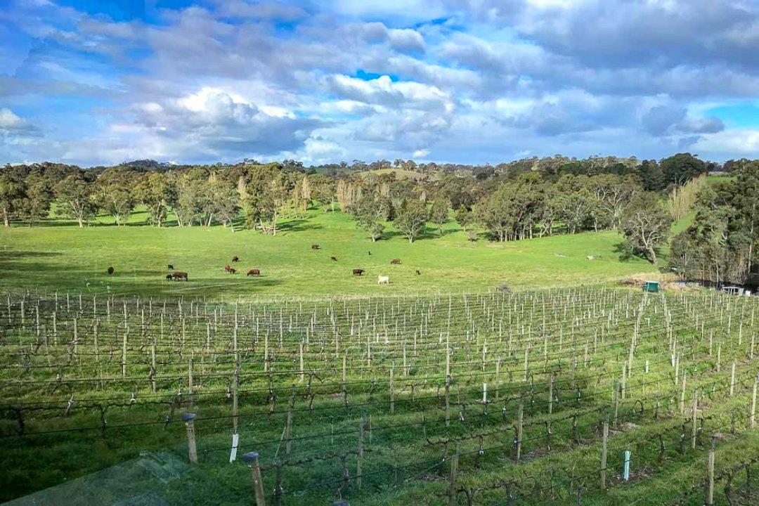 Australia's wine country ©Josie Wanders