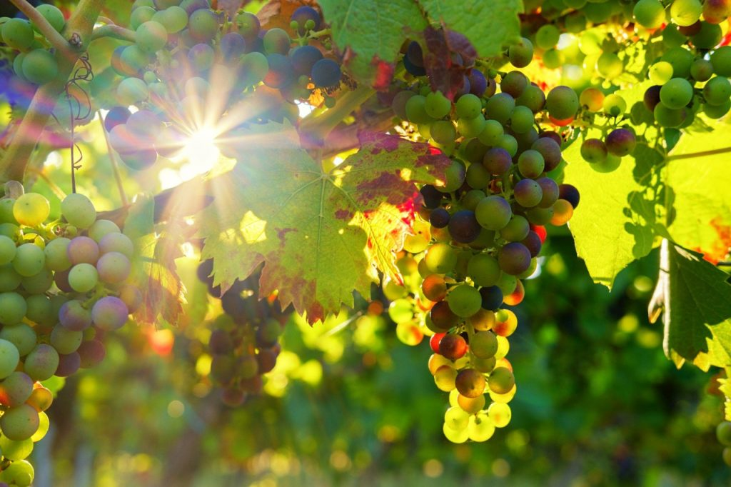 Booming wine destinations