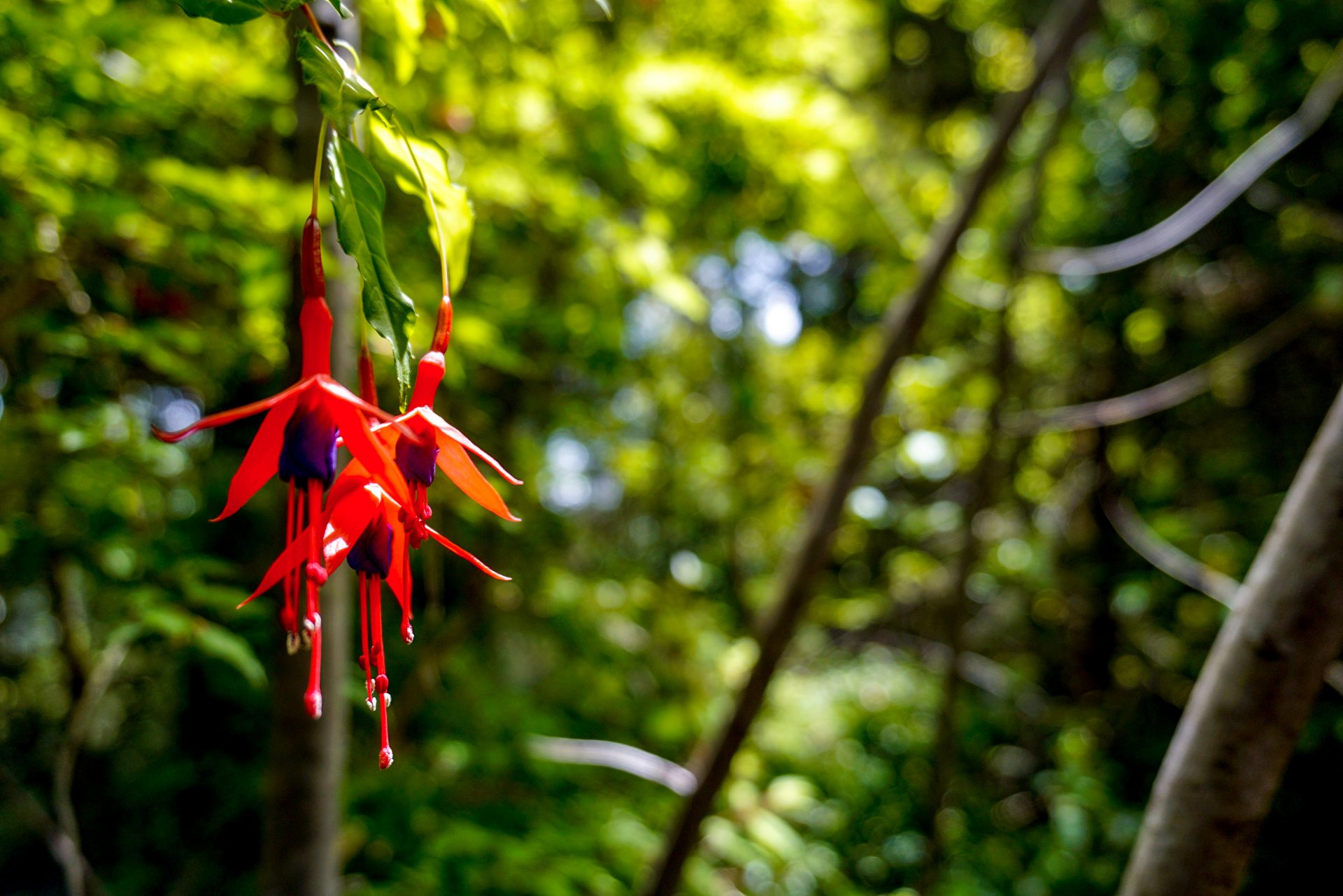 Flora in the Huillo Huilo Reserve, Chile - Experiencing the Globe