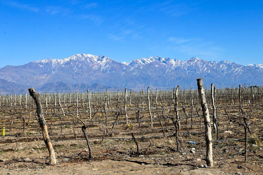Mendoza's vineyards, Argentina ©Sol Salute