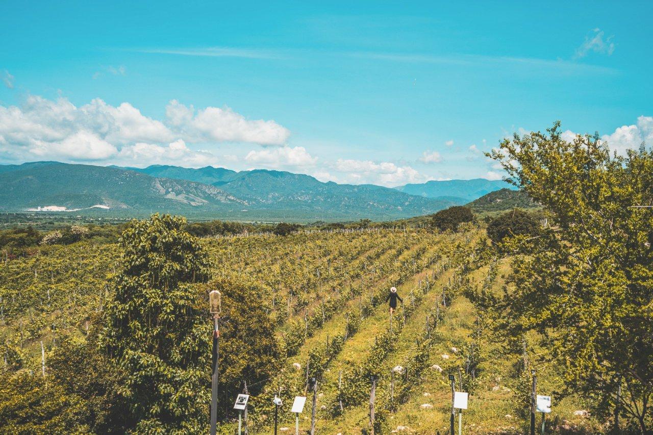 Ocoa Bay winery, Dominican Republic - Dominican Republic Ministry of Tourism