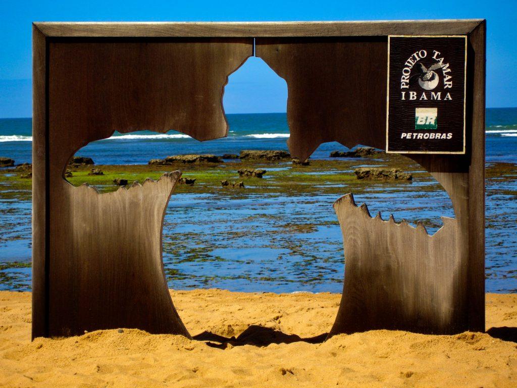 Proyecto Tamar, Praia do Forte, Bahia, Brazil