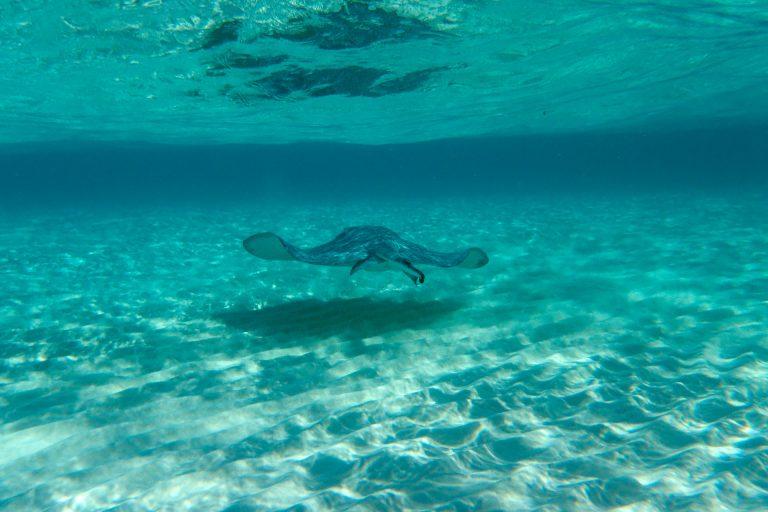Stingray city, Cayman Islands – Experiencing the Globe