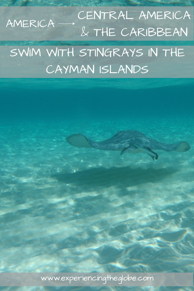 Swim with stingrays in the Cayman Islands