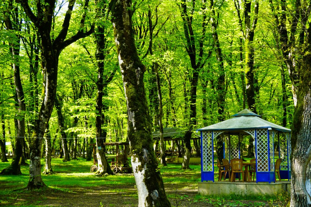 Tea in the forest, Ismailli, Azerbaijan – Experiencing the Globe